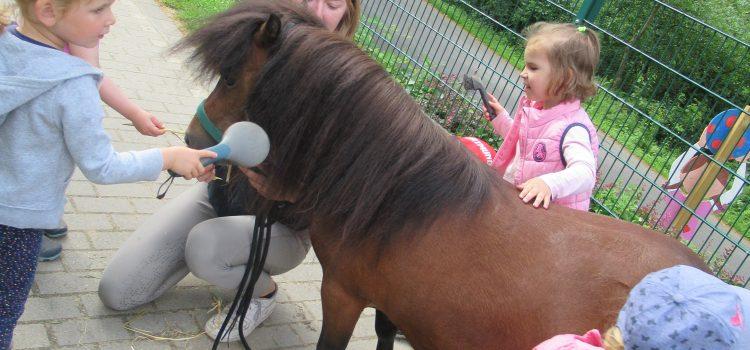 """Ein """"tierischer"""" Sommer mit Pony und Bienen"""